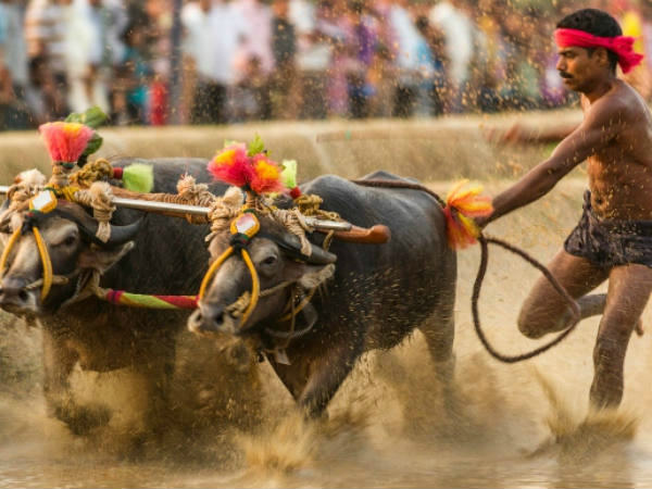 Now its time to protest for Kambala