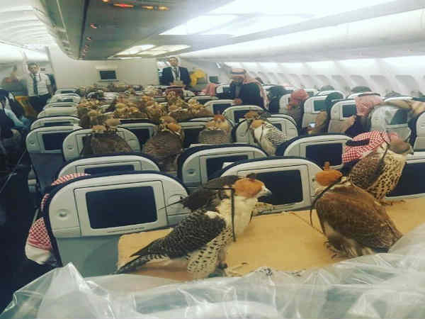 Saudi Arabia prince buys 80 plane tickets for unusual guests