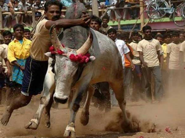 If you want to ban jallikattu, ban biryani too says Kamal Hasan