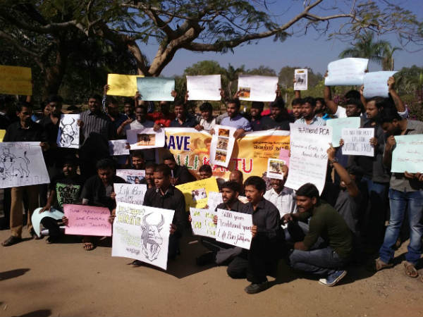 Give a chance for the sport Jallikattu, Tamil-based employees protest