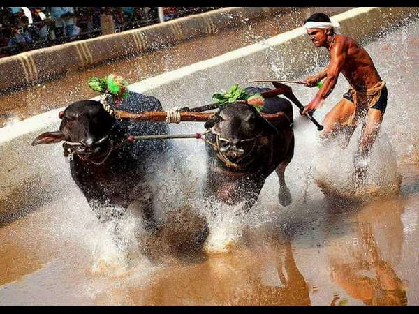 The Story of Uncrowned 'Kambala King'