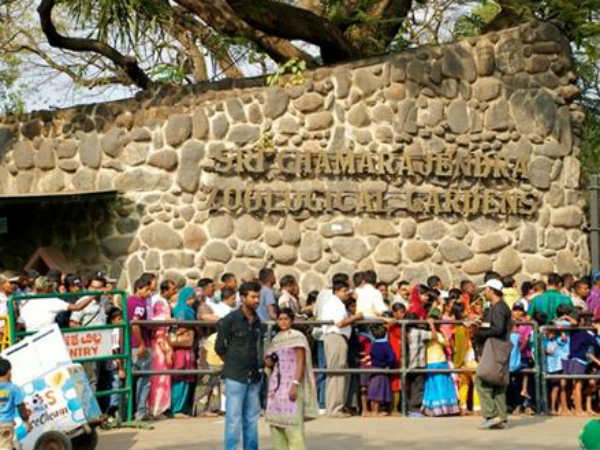 Mysore Zoo is virus-free: within  two days are available to the public