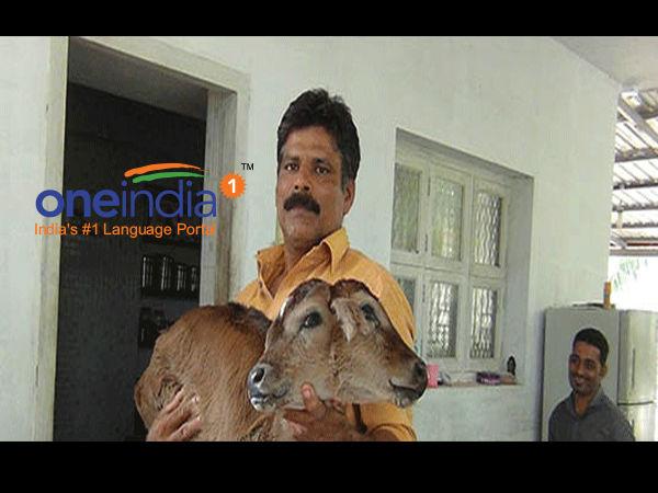 ಮಂಗಳೂರು: ನವಜಾತ ಕರುವಿಗೆ ಎರಡು ತಲೆ, 4 ಕಣ್ಣು!