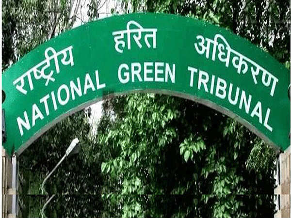 If you are unplanted 21,000 saplings Yettinahole planning is cancel: NGT