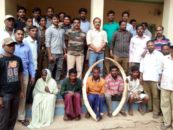 Ivory thieves held in Bandipur