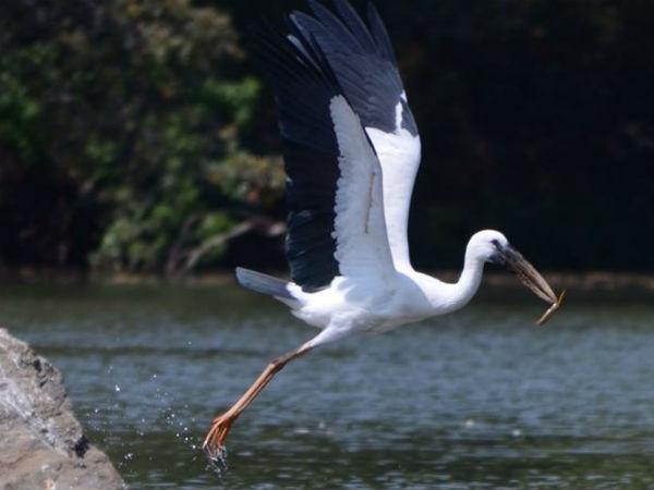 Birds Honeymoon Spot Ranganathittu