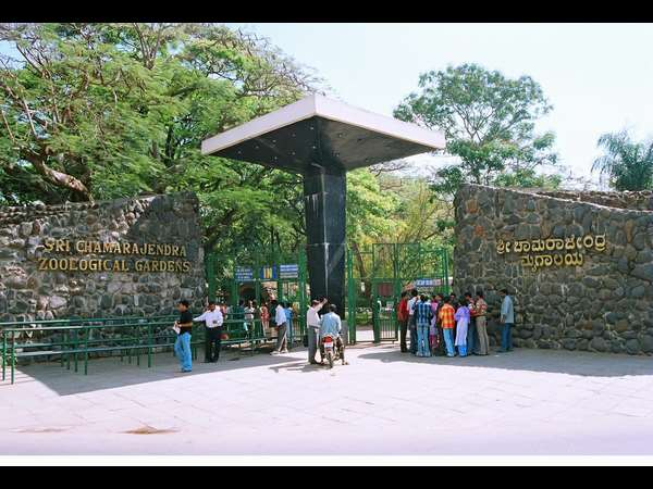 Mysore Zoo Officials Cold War What Happened For Zoo