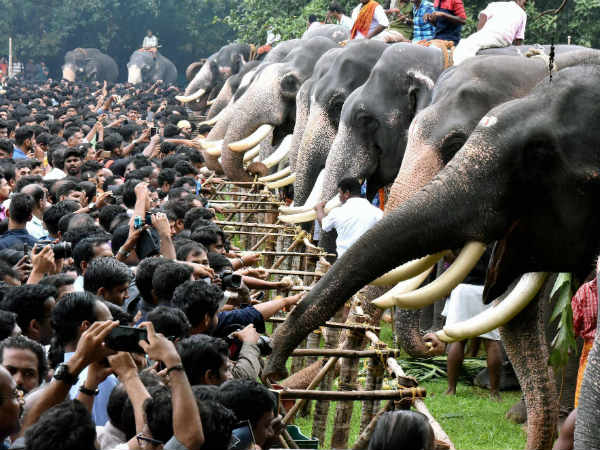How Elephants Treated In Auspicious Occasion