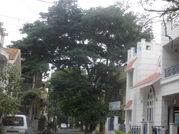 Bengaluru: Just 8 Days Left To Save 112 Trees