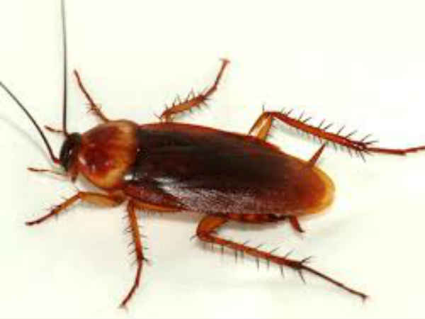 Doctors Found A Live Cockroach In Her Skull