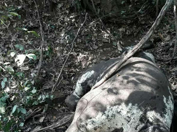 Another Elephant found dead in Sampaje reserve forest Mangaluru