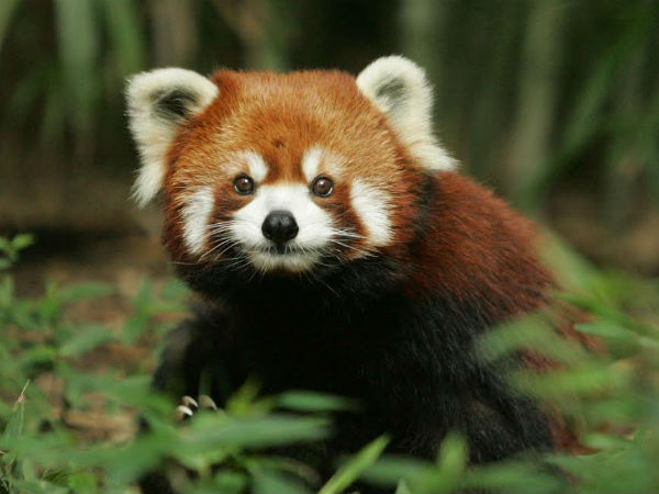 Who Will Save These Endangered Animals