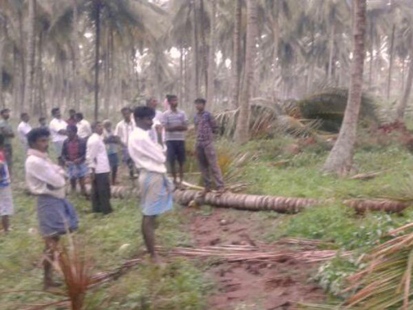 Rain with hailstorm caused damages in Mandya district