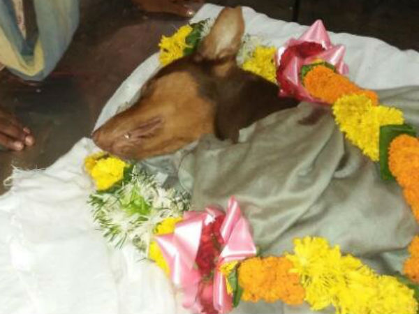 Dog stabbed to death while saving master in Mumbai