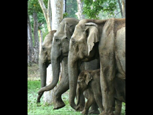 Volunteers joined Elephant Census in Bandipur