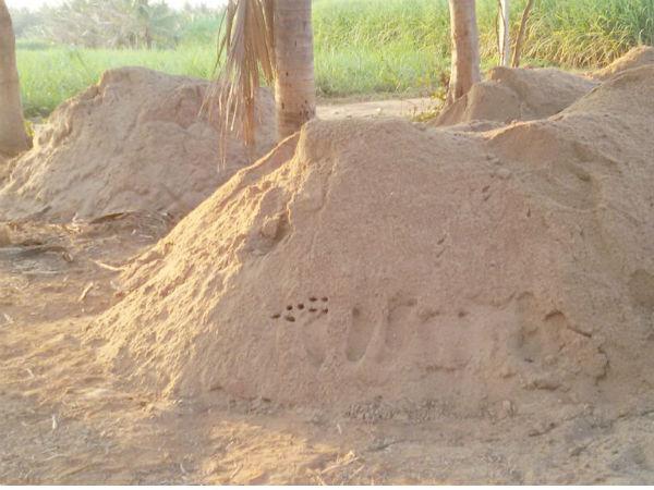 ಹುಬ್ಬಳ್ಳಿ: ಅಕ್ರಮ ಮರಳು ಅಡ್ಡೆ ಮೇಲೆ ದಾಳಿ, 32 ಲಾರಿ ಮರಳು ವಶ