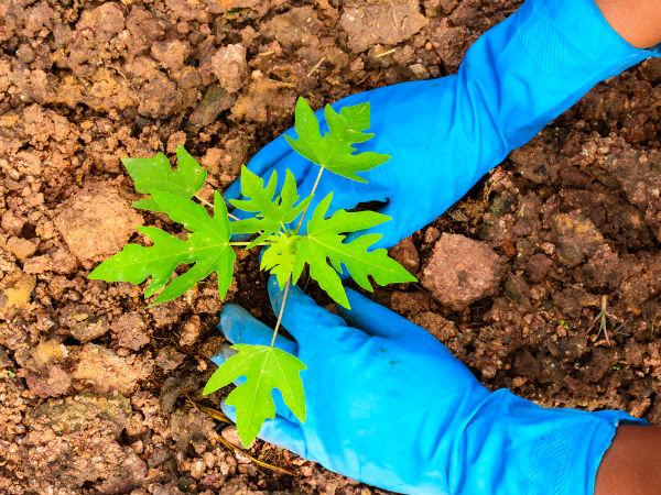 Plant Tree Take Selfie And Win Prize In Vijayapura
