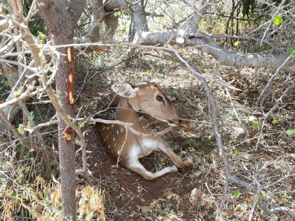Chamarajanagar forest department officials nabbed a deer hunter