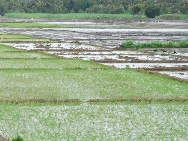 Water For The Mandya Lakes Agricultural Activities In Fast Mode