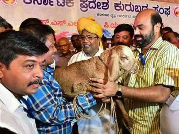 Fan gifted sheep and blanket to Siddaramaiah