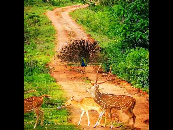 Bandipur wild life got a new look after continuous rainfall in the state