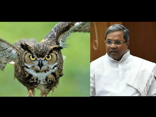 Owl Found Again In Cm Siddaramaiah Office In Vidhana Soudha