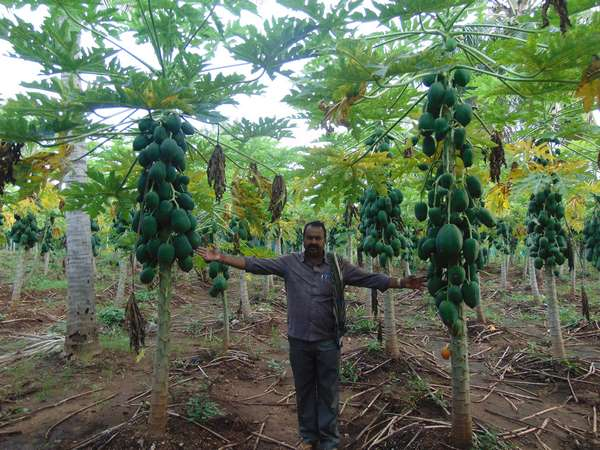 Mysuru District Farmer Chikka Revanna S Mixed Cropping Grown Success Story