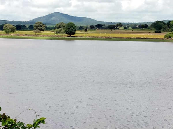 Bandipur National Park Lakes Filled After Continuous Rainfall