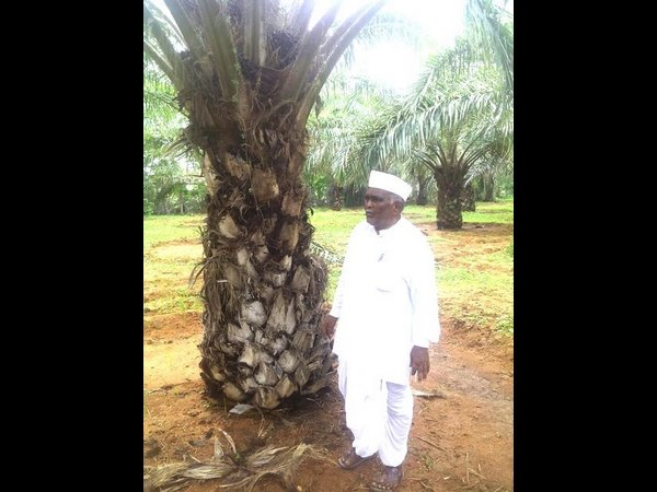Koppal District Farmer Shankar Gouda S Palm Crop Growed Success Story