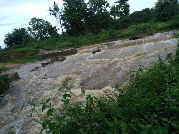 Mandya Viraja Canal In Shrirangapatna Broken Crops Wash Away
