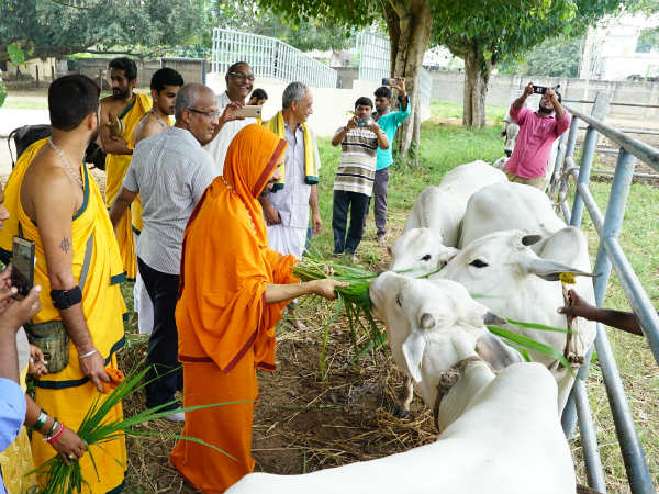Malnad Cow Milk Will Be Used For Tirupati Balaji Abhishekha