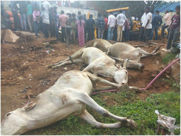 4 oxen, one cow and a calf died in a wall collapse at Hubballi