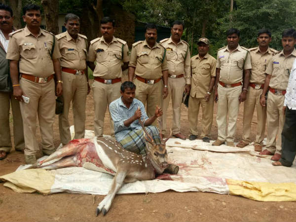 Haveri: Forest officials arrests deer hunter in Hanagal