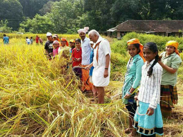 Kalladka school children have cultivated paddy