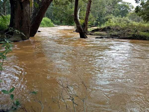 Mule river filled for raining heavily in Bandipura region