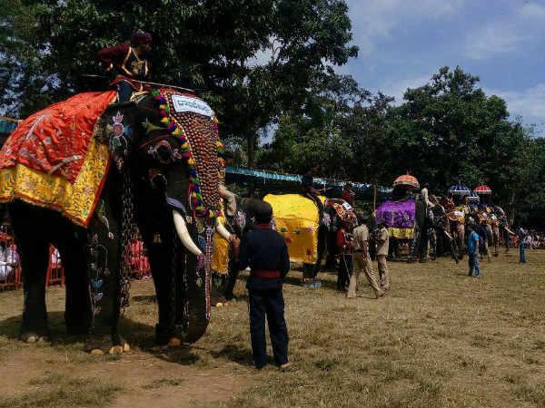 In Pics Elephant Day 2017 At Sakrebailu Shivamoga