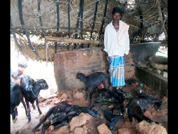 Six Goat Dies As Wall Collapsed For Heavy Rain In Mandya