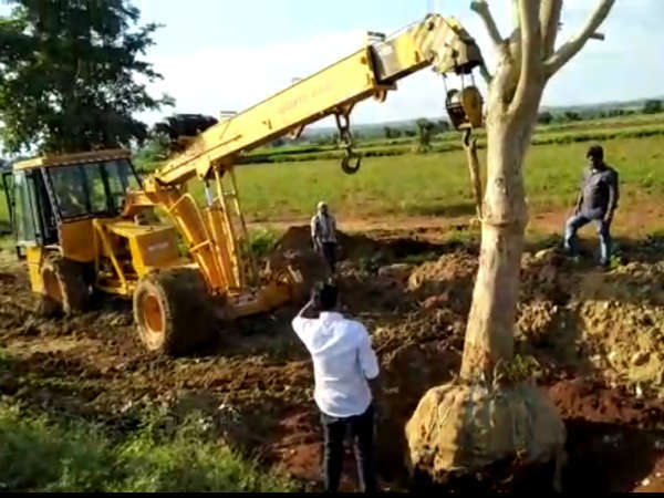South Western Railways Transfer 42 Trees Safely From One Place To Another In Hubballi