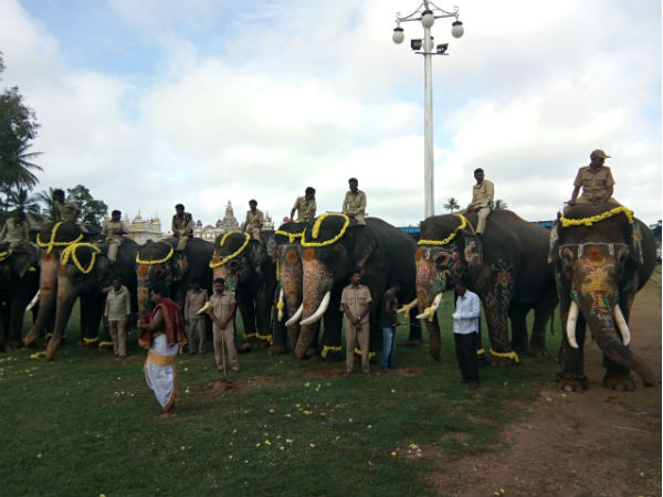 Send Off To Jamboo Elephant An Emotional As Well As Honour Moment