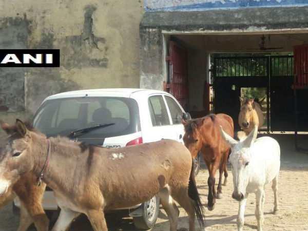 Donkeys Released By Up Police After 4 Days