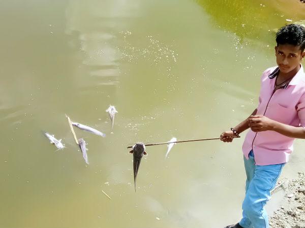 ಮಂಡ್ಯ: ಅಣ್ಣೂರು ಕಟ್ಟೆಯಲ್ಲಿ ಮೀನುಗಳ ಮಾರಣ ಹೋಮ