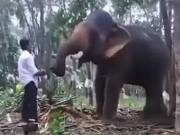 Youth tries Baahubali elephant stunt in Kerala, gets flung in the air