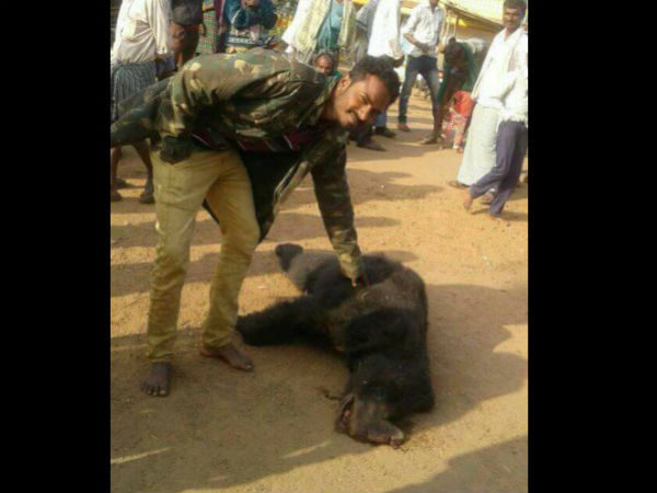 Bear attacked a man, in revange farmers killed it