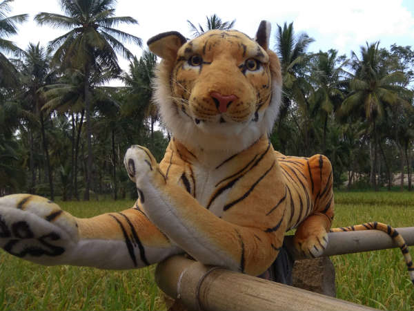 Farmers in Ramanagara take the help of Tiger doll to save crop