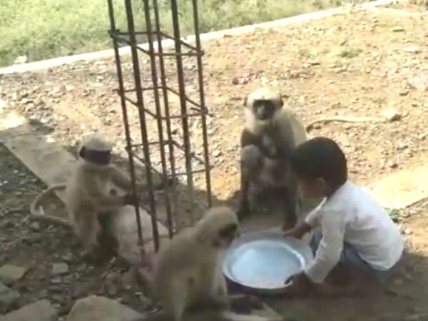 A boy and many monkeys, they are Friends!