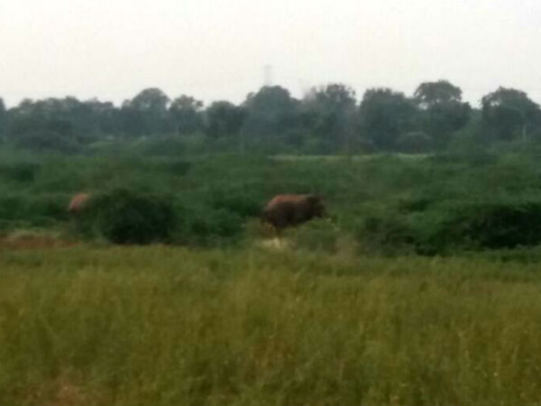 Wild elephants sighted near challakere