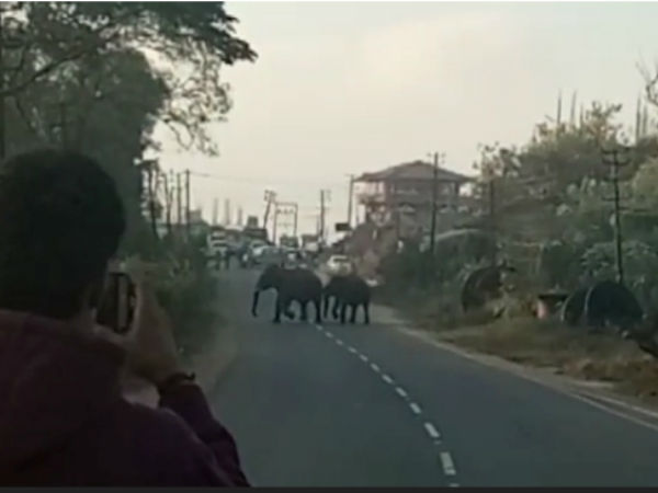 Wild Elephants Passes In Front Houses In Madikeri