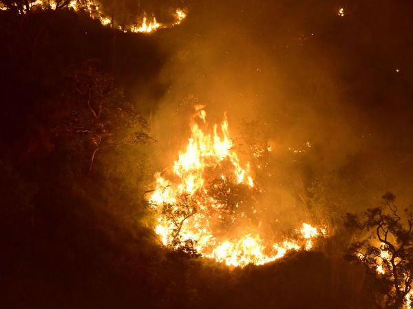 Forest dept Officials cool to forest fire in WG