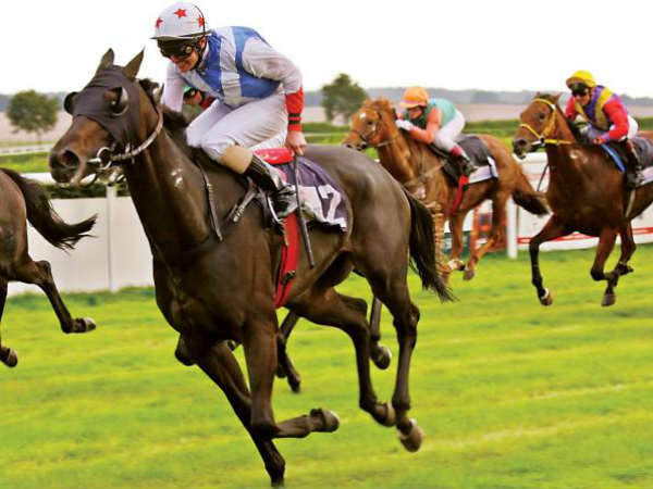 Highcourt refuses give stay on doping race horse