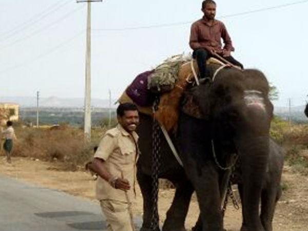 Baby Elephants Shifted To Rampura Range